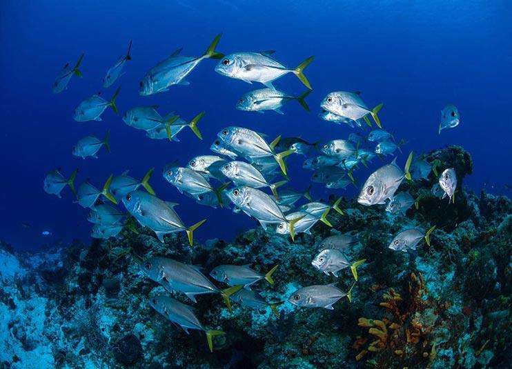 scuba_diving_lesson_in_cancun _plus_reef_5