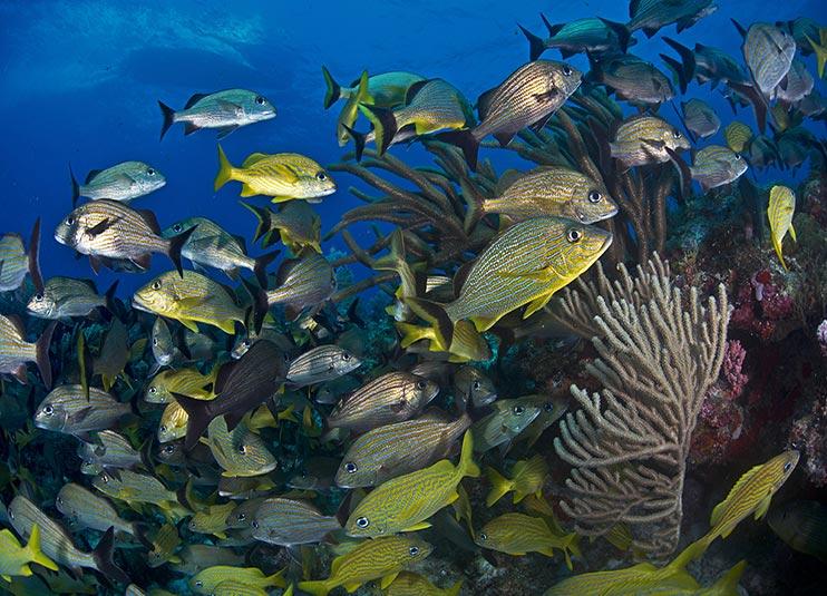 scuba_diving_lesson_in_cancun_plus_reef