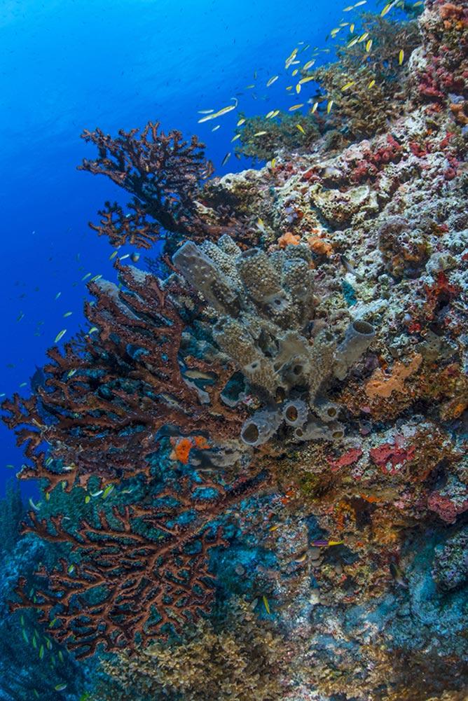 Scuba diving lesson in Cancun  plus reef_2