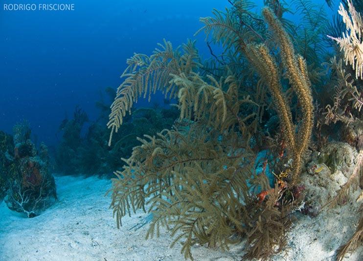 scuba_diving_lesson_in_cancun _plus_reef_3
