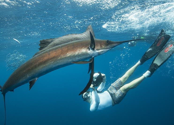 sailfish_snorkeling_4